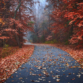 Trail on a foggy morning by Carol Plummer - City,  Street & Park  City Parks ( nature, park, fog, trail, morning, city,  )