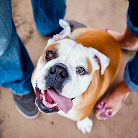 by Gabi Dibos - Animals - Dogs Portraits