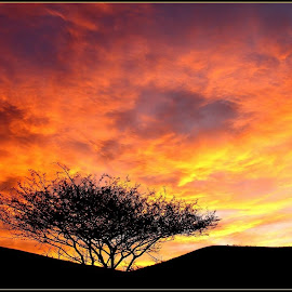Burning bush by Romano Volker - Landscapes Sunsets & Sunrises