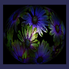 by Amanda Coertze - Digital Art Abstract ( flowers,  )