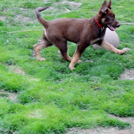 Check out my strut by Beverly Lane - Animals - Dogs Puppies (  )