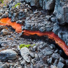 Lava rocks by Tom LeClair - Nature Up Close Rock & Stone ( oarange rock stone maui island images by tlp )