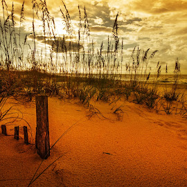 Post in the Sand by Michael Thomas - Landscapes Sunsets & Sunrises ( palm, sand, michael thomas, tree, sunset, trees, sunrise, beach, alabama, micdesigns )