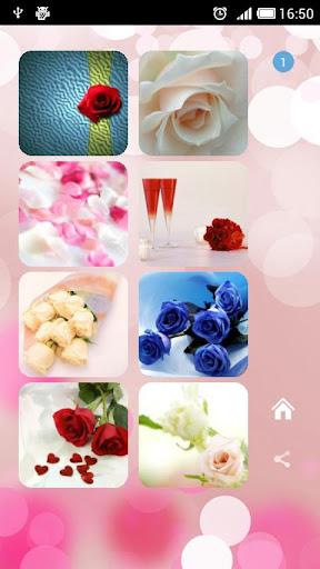 Roses flower Wallpapers