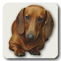 Dachshund sad song DONATE icon