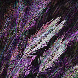 Neon Foxtails by Waynette  Townsend - Digital Art Things ( purple, neon, art, seeds, weeds, foxtails,  )