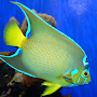 Fish of the Coral Reef 2 FREE