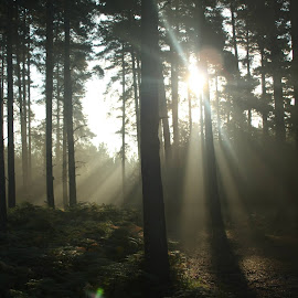 Morning02 by Molly-Jane Bowen - Landscapes Forests