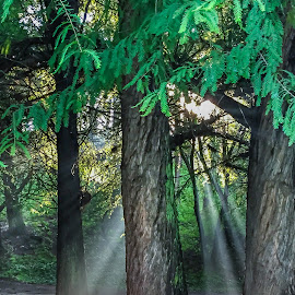 Light in the trees  by Peter Schoeman - Instagram & Mobile iPhone