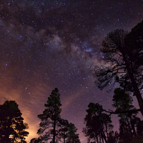 stars, milky way and trees by Cristobal Garciaferro Rubio - Landscapes Starscapes ( stars, trees, starscape, milky way )