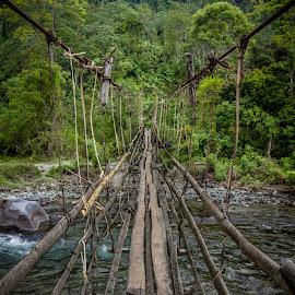 The Bridge by Nila Elect - Landscapes Travel ( myanmar, jungle, trekking, forest, bridge, travel, burma, hiking, rural )