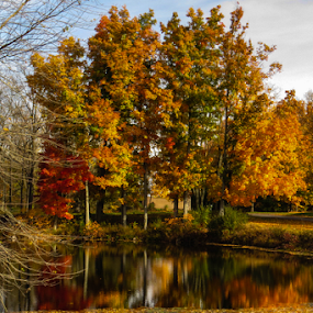 Fall's Reflections by Vonelle Swanson - Landscapes Travel