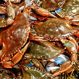 Maryland Crabs by Donna Neal - Food & Drink Eating ( i phone images and videos )