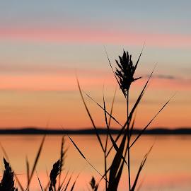 Before sunrise by Steve Morrison - Landscapes Sunsets & Sunrises