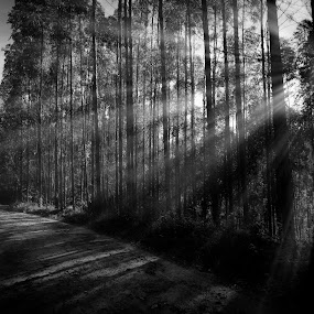light road by Marcos Lamas - Black & White Landscapes