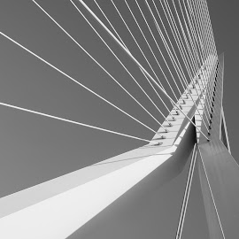 Erasmus Bridge by Anita Berghoef - Buildings & Architecture Bridges & Suspended Structures ( black and white, white, lines, architectural detail, bridge, architecture, looking up )
