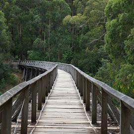 Trestle Bridge Walk by Jefferson Welsh - Buildings & Architecture Bridges & Suspended Structures