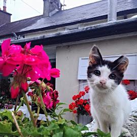 Yuki by Leah NicSuibhne - Animals - Cats Kittens