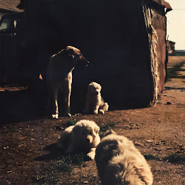 Family I by Tudor Rusu - Animals - Dogs Puppies ( food, sun light, happiness, dog, morning, friend )