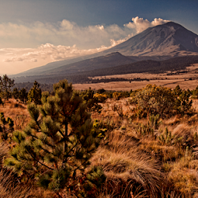 Field and Smoking volcano by Cristobal Garciaferro Rubio - Landscapes Prairies, Meadows & Fields ( volcano, popo, mexico, popocatepetl, smokkng volcano )