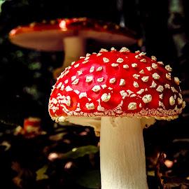 by Adrian Rusu - Nature Up Close Mushrooms & Fungi ( Hope,  )