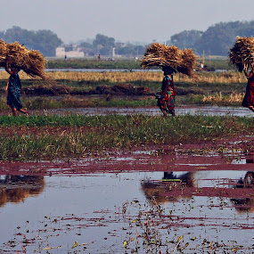 Back to Home by Subrata Sarkar - Landscapes Prairies, Meadows & Fields ( nature up close, landscape, people, photography )