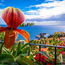 by Ricardo Gonçalves - Nature Up Close Gardens & Produce ( Flowers, Flower Arrangements )