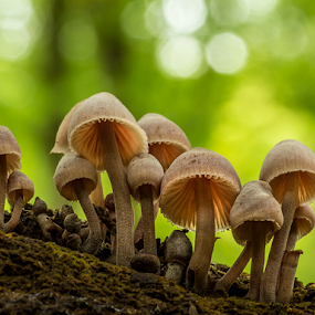 Fungi group on a stump by Peter Samuelsson - Nature Up Close Mushrooms & Fungi