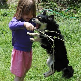 Stick tug O' war by David Adamson - People Family ( playing, pet, children, fun, dog )
