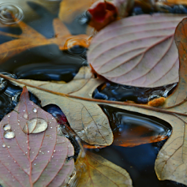 by Jill Beim - Nature Up Close Leaves & Grasses ( water, water drops, autumn, fall, nature up close, leaves,  )