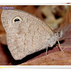 Common Five Ring Dry Season Form