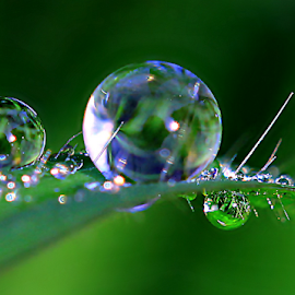 by Fentee  Affandy - Nature Up Close Natural Waterdrops ( macrophotography, grass, waterdrops )