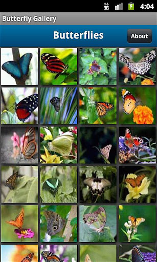 Butterfly Photo Gallery