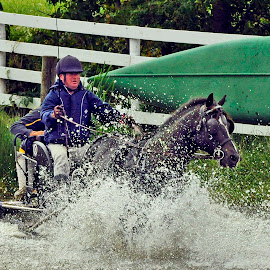 Water Hazard - Combined Driving Event by Reuss Griffiths - Sports & Fitness Other Sports ( water hazard, ohio cde, combined driving event (cde), windy knoll farms, single horse )
