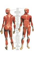 Screenshot of Body building,Gym