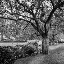 Invitation to the Shade by Jack Brittain - City,  Street & Park  City Parks ( b&w, bench, toronto, ontario, landscape, shade, downtown )