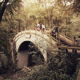 Forest bridge by Matteo P. - Landscapes Travel ( natura, cina, bamboo, bridge, china )