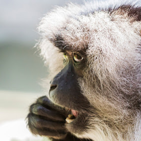 by Jarrod Kudzia - Animals Other Mammals ( , Africa, Safari )