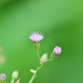 by Syarief Wiranegara - Nature Up Close Leaves & Grasses