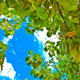 Under the Tropical by Eka Fatari - Nature Up Close Leaves & Grasses ( blue sky, nature, tropical, leaves, country )