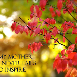 A Gift by Taylor Gillen - Typography Captioned Photos ( mother, autumn, red bush, typography, captioned )