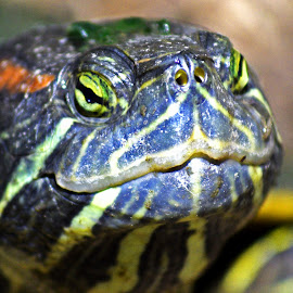 Turdle by 2Arian 2Furious - Animals Reptiles ( woooow, beauiful, poop, so turd, i ruv it,  )