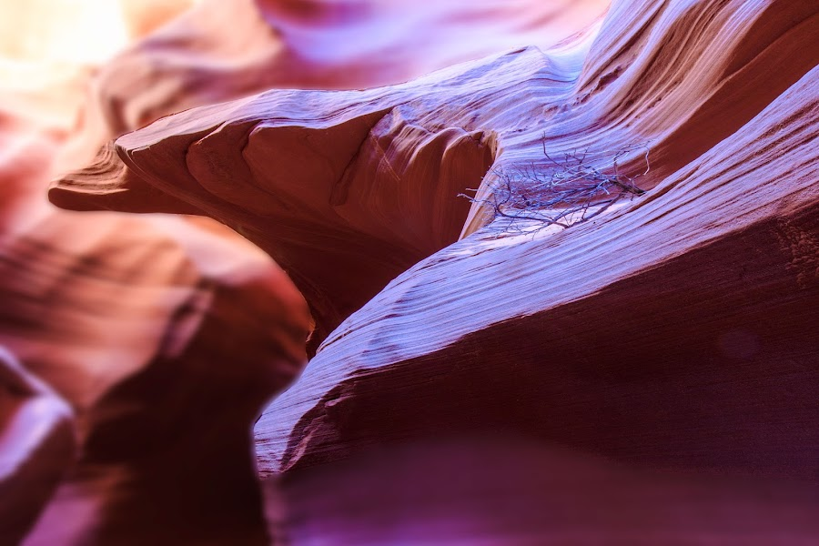 Eagle Has Landed by Flavio Mini - Nature Up Close Rock & Stone ( slot canyon, eagle, arizona, rock, cave, formation )