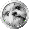 Shih Tzu Theme icon