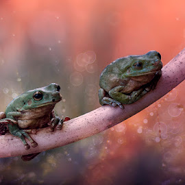 so SAD by Alonk's Roby - Animals Amphibians
