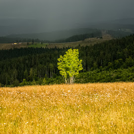 Bucovina by Ionel Lupu - Landscapes Cloud Formations ( bucovina,  )