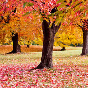 by Samer Shaur - Nature Up Close Trees & Bushes ( fall leaves on ground )