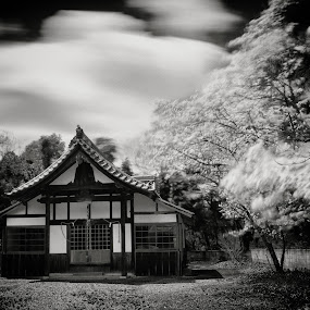 Sakura by Kurt K Gledhill - Buildings & Architecture Places of Worship ( temple, okayama, shrine, japan, nature, white, sakura, black )