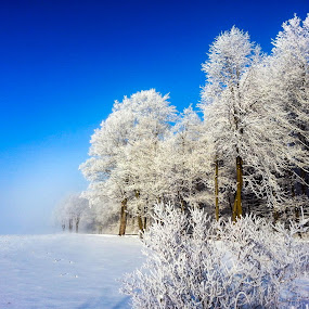 Hoar Frost Explosion by Christine Weaver-Cimala - Landscapes Weather ( canon, chrystal, beautiful, frost, white, hoarfrost, michigan, winter, cold, nature, fog, freeze, trees, weather )