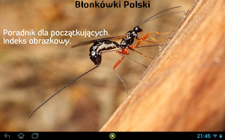 Screenshot of Błonkówki